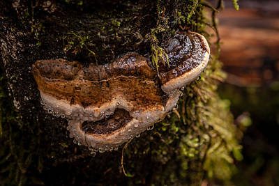 Photograph - Fungus by Melinda Ledsome