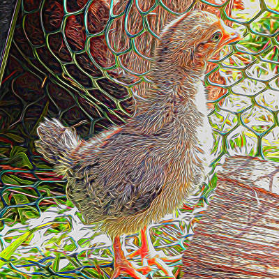 Mixed Media - Funky Chicken by Pamela Walton