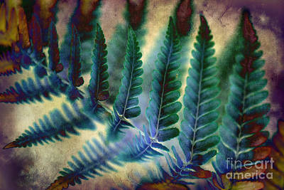Photograph - Funky Fern. by Clare Bambers