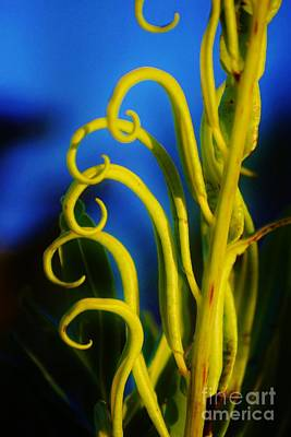 Photograph - Funky Fern Unfurling by Lynda Dawson-Youngclaus