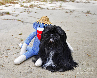 Al Powell Photograph - Funky Monkey And Sweet Shih Tzu by Al Powell Photography USA
