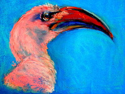 Hornbill Painting - Funky Red-billed Hornbill Art Print by Sue Jacobi