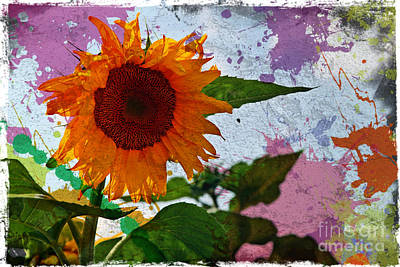 Manipulation Photograph - Funky Sunflower by Sophie Vigneault
