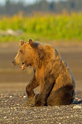 Photograph - Funny Bear by Shari Sommerfeld