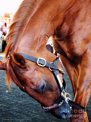 Funny Cide A Champion Print by Deborah Fay