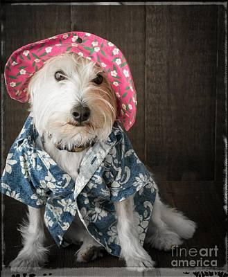 Hawaii Dog Photograph - Funny Doggie by Edward Fielding