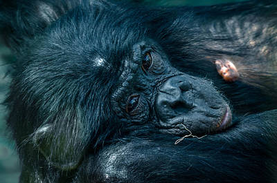 Humanlike Photograph - Stare by Brian Stevens