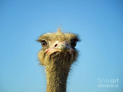 Ostrich Photograph - Funny Ostrich by Sinisa Botas