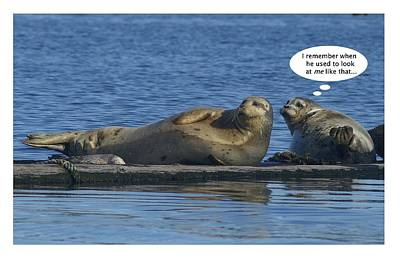 Funny Seals Art Print