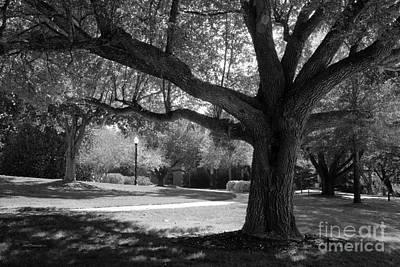 Photograph - Furman University Landscape by University Icons