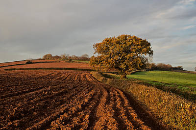 Furrows And Field Art Print by Pete Hemington