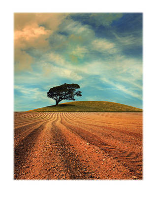 Tree-lined Photograph - Furrows by Mal Bray