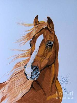 Drawing Of A Horse Drawing - Fury - Hhh Horse Rescue Series 2 by Cheryl Poland
