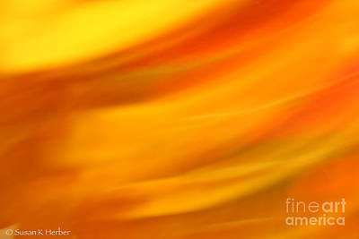 Photograph - Fury In Color by Susan Herber