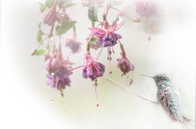 Hummingbird Photograph - Fuschia Dreams by Susan Capuano