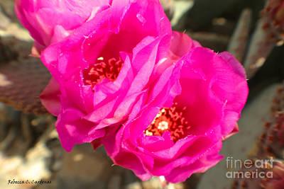 Photograph - Fuscia Desert Rose by Rebecca Christine Cardenas