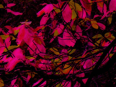 Digital Art - Fuscia Leaves by Kristen R Kennedy