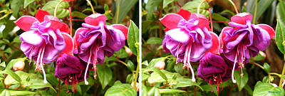 Photograph - Fushia Blossoms In Stereo by Duane McCullough