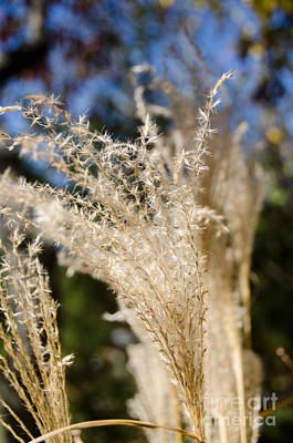Photograph - Fuzzy Grass 1 by Cassie Marie Photography