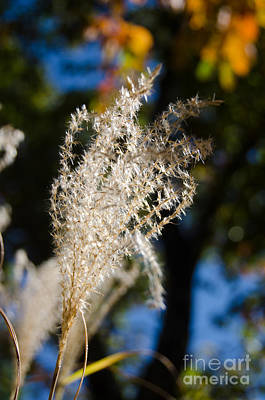 Photograph - Fuzzy Grass 3 by Cassie Marie Photography