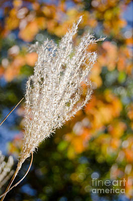 Photograph - Fuzzy Grass 4 by Cassie Marie Photography