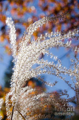 Photograph - Fuzzy Grass 6 by Cassie Marie Photography