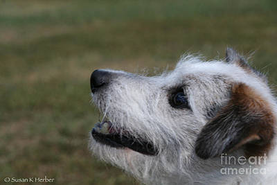 Photograph - Fuzzy Whiskers by Susan Herber