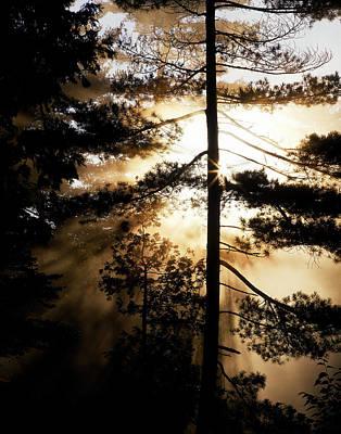 Fv5423, Perry Mastrovito Sunrise Though Print by Perry Mastrovito