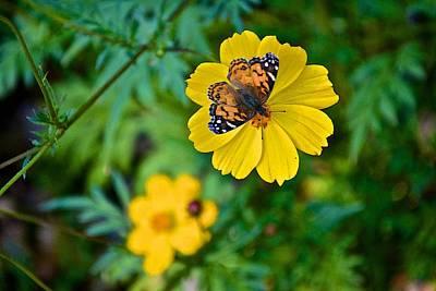 Photograph - Fw Botanical Gardens 13 by Ricardo J Ruiz de Porras