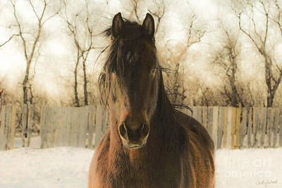 Friesian Digital Art - Gabriel In Winter by Judy Wood