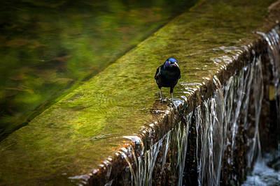 Photograph - Gackle 2 by Sennie Pierson