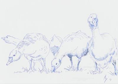 Drawing - Gaggle Of Geese by Mike Jory