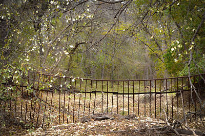 Photograph - Gainesville 9422 by Ricardo J Ruiz de Porras
