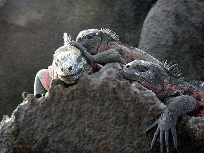Photograph - Galapagos Islands 09 by Jeff Brunton