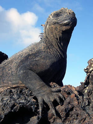 Photograph - Galapagos Islands 15 by Jeff Brunton