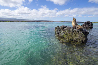 Galapagos Islands Photograph - Galapagos Sea Lion Elizabeth Bay by Tui De Roy