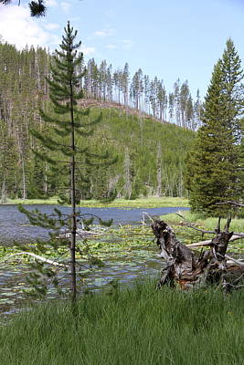 Gallatin River Photograph - Gallatin River Yellowstone  by Christiane Schulze Art And Photography