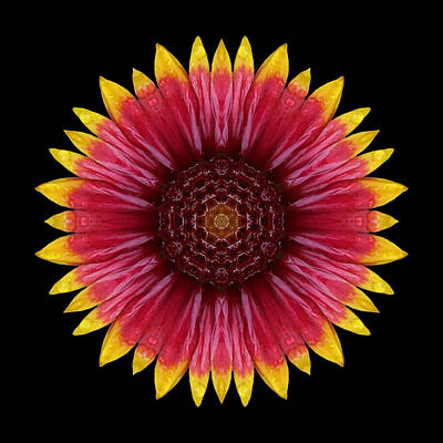 Photograph - Galliardia Arizona Sun Flower Mandala by David J Bookbinder