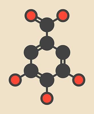 Gallic Acid Molecule Art Print