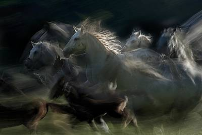 Running Horses Photograph - Gallop by Milan Malovrh