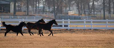 Photograph - Galloping Freedom by Ricardo J Ruiz de Porras