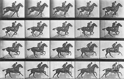 Eadwerd Photograph - Galloping Horse by Eadweard Muybridge