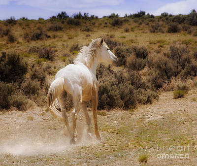 Photograph - Galloping White Stallion Wild Horse On Navajo Indian Reservation  by Jerry Cowart