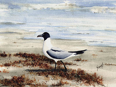 Gull Wall Art - Painting - Galveston Gull by Sam Sidders