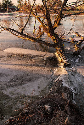 Photograph - Gananoque River Tree I by Jim Vance