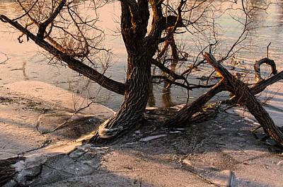 Photograph - Gananoque River Tree II by Jim Vance