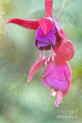 Photograph - Garden Ballerinas by Linda Lees