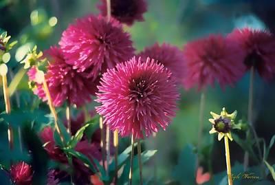 Photograph - Garden Beauties by Dyle   Warren