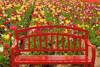 Botanical Photograph - Garden Bench And Spring Tulips by Steve Bly