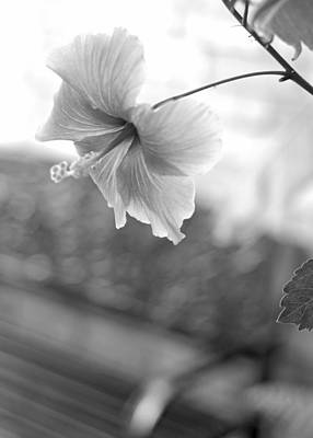 Photograph - Garden Bench Bokeh With Hibiscus B W by Connie Fox